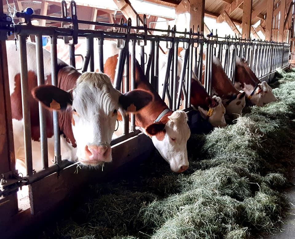 L'agriculture sur le canton