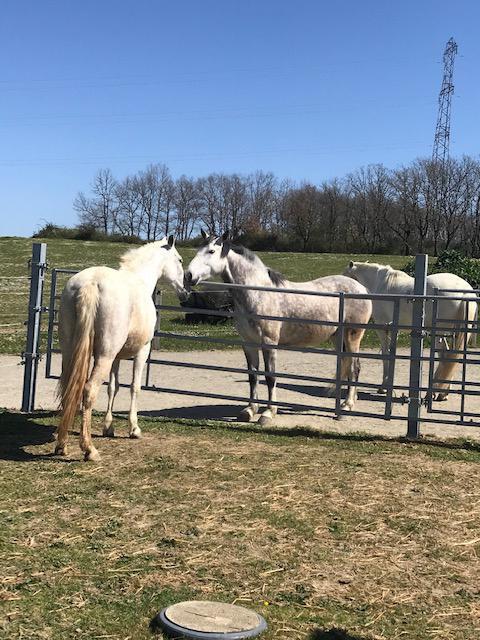 L'intégration de votre cheval dans notre écurie active