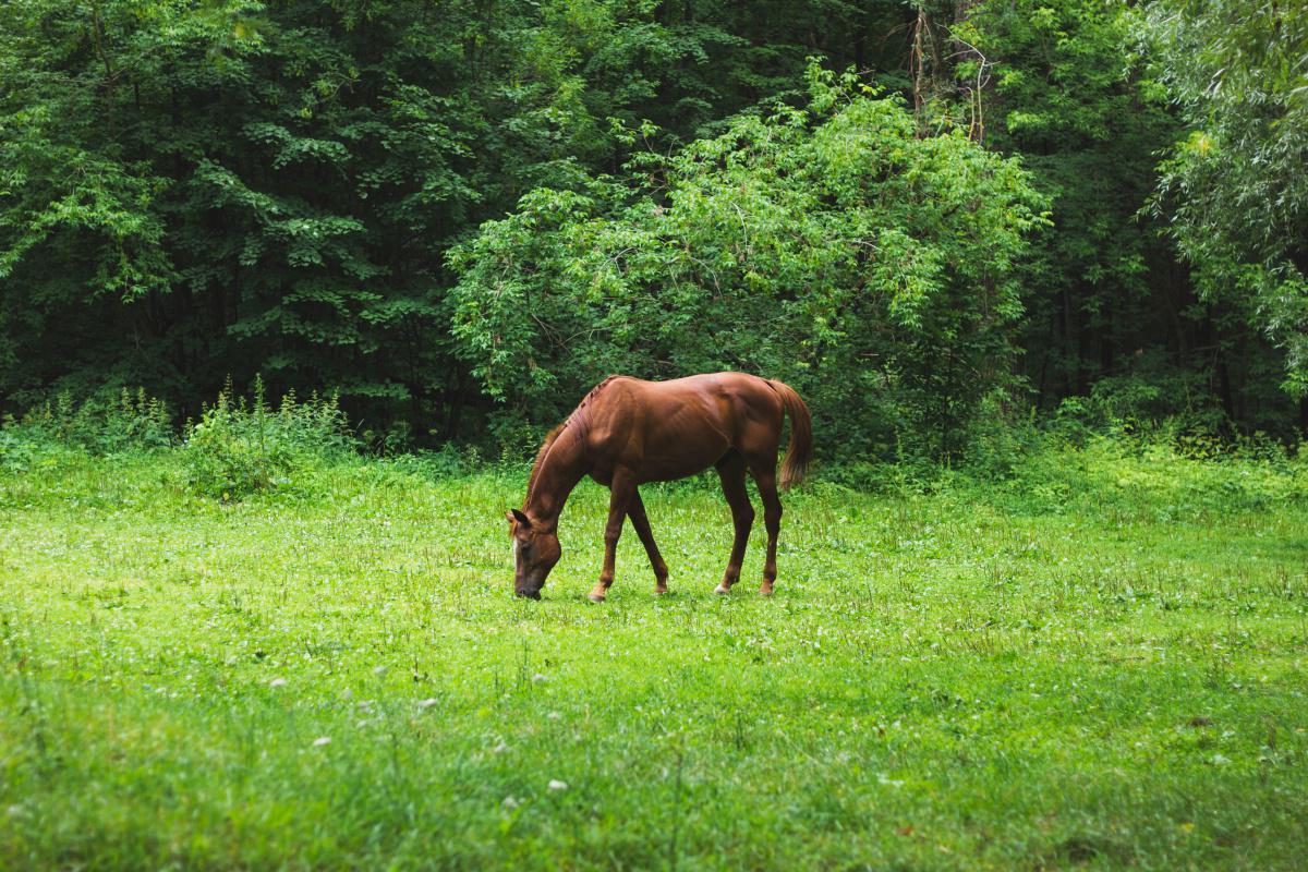 La définition du bien-être du cheval