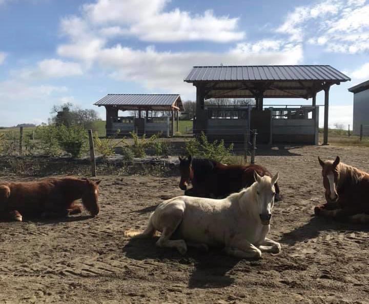 Evaluer le bien-être de votre cheval en pension