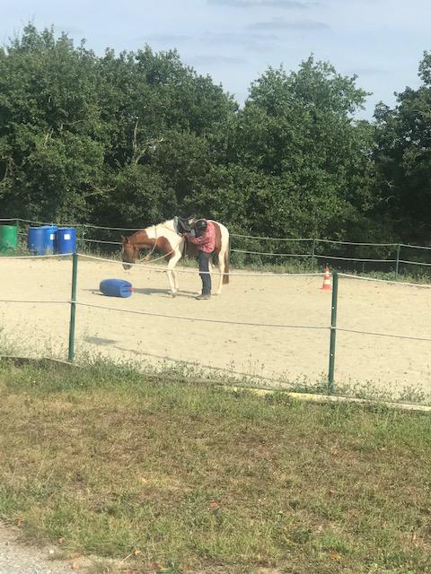 Débourrage et travail du jeune cheval 5