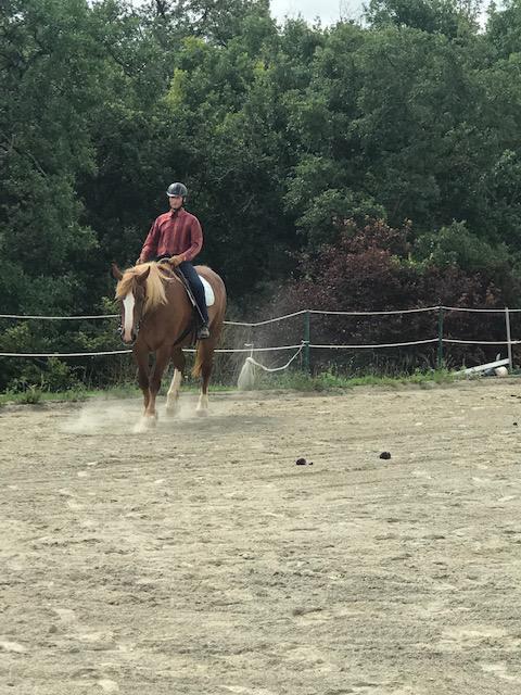 Débourrage et travail du jeune cheval 7
