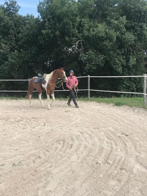 Débourrage et travail du jeune cheval 3