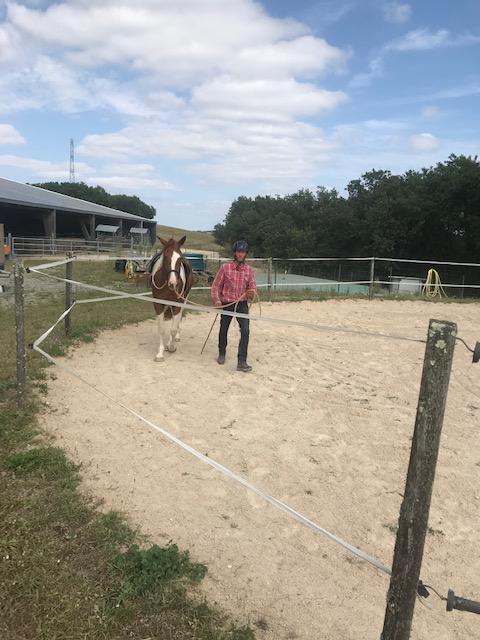 Débourrage et travail du jeune cheval 4