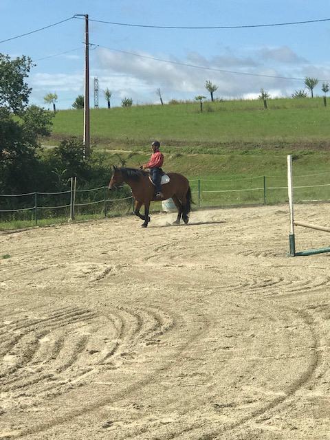 Débourrage et travail du jeune cheval 6