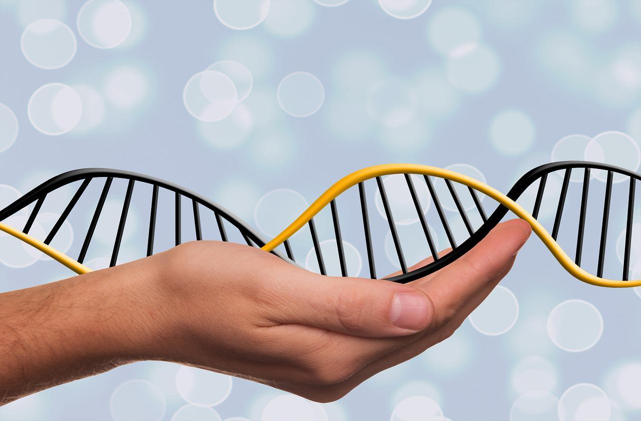 Los Genes De Un Hombre Determinan El Sexo De Sus Hijos
