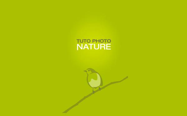 Showcase : Tuto Photo Nature