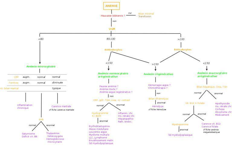 Anémie: Orientation diagnostique
