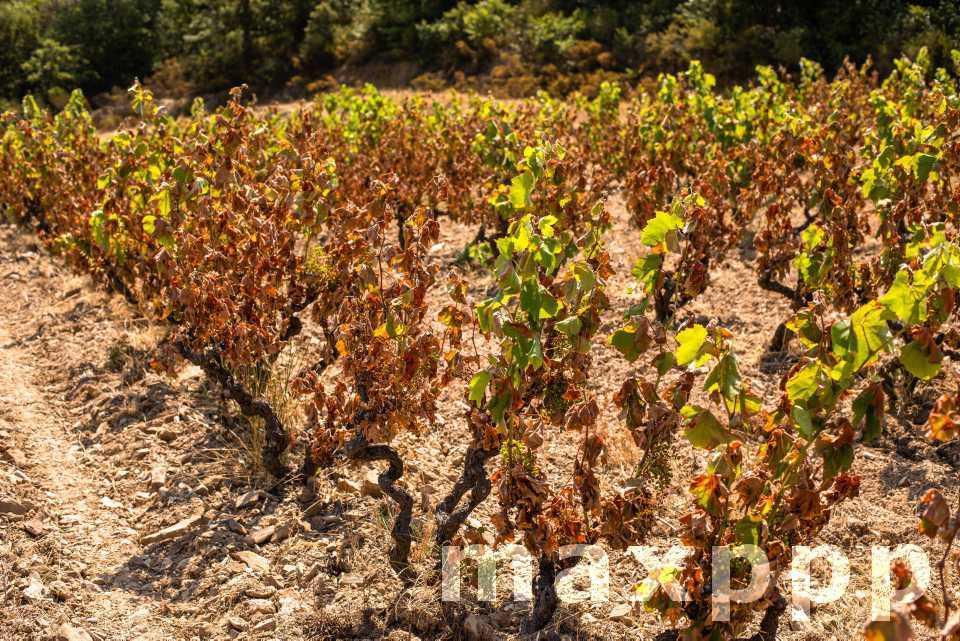 21 départements français en crise sécheresse