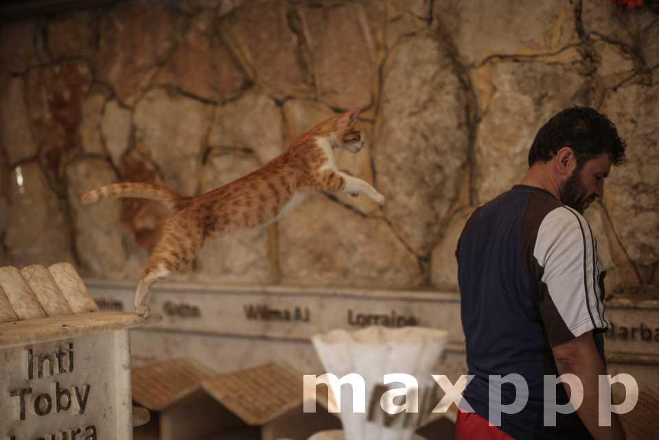 L'homme aux chats d'Alep