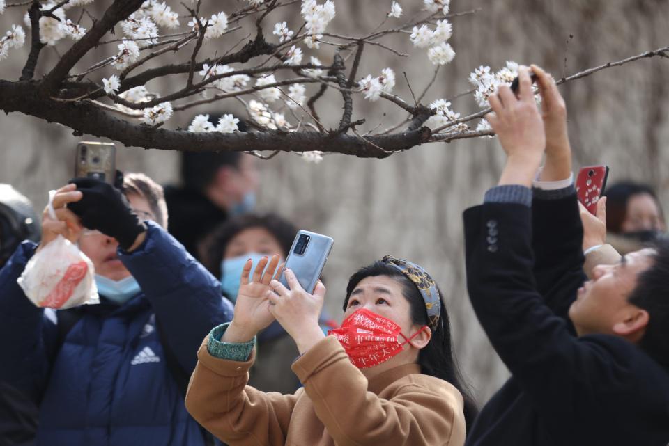 [Focus] - Les somptueux cerisiers en fleurs annoncent le printemps en Asie!