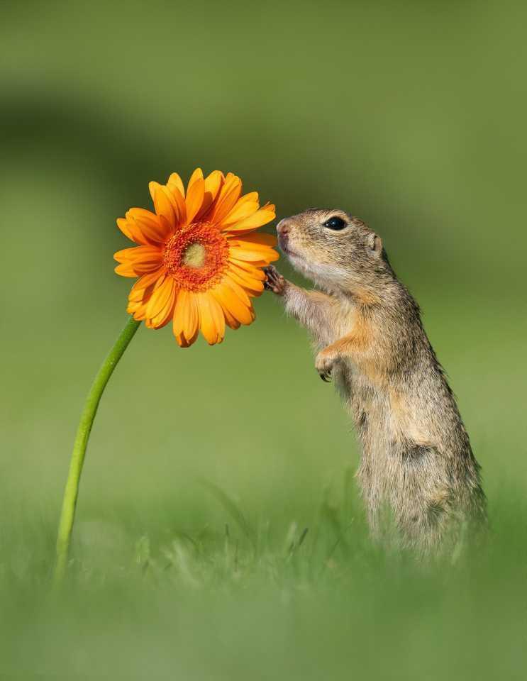 [Focus] - Des animaux et des fleurs... pour des photos trop mimi