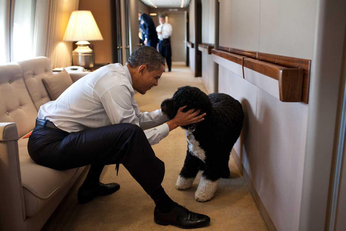 [Focus] - Les chiens de présidents français et américains !