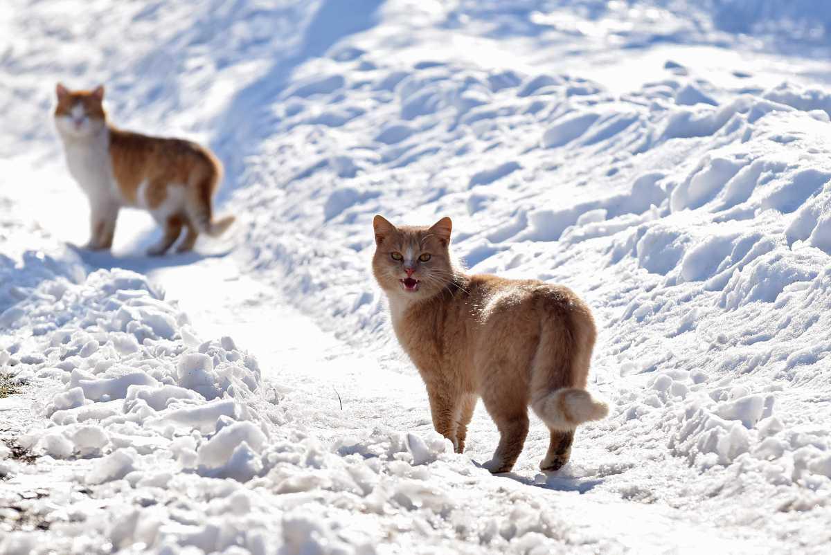 [ Focus ] - Les chats ont-ils froid en hiver?
