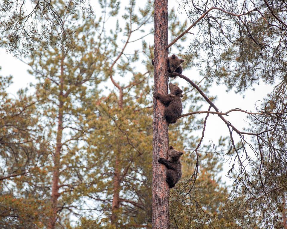 [Focus] - **Alerte cute animals** les oursons sont de sortie pour le printemps !