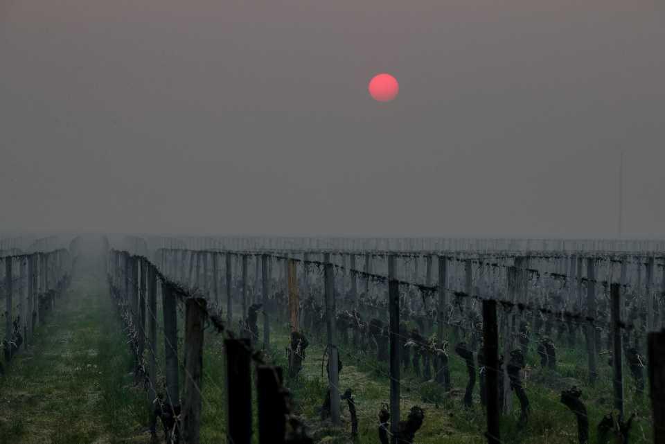 [Focus] - Spectaculaires images de lutte contre le gel dans les vignes françaises... Y aura t'il du vin en 2021 ?