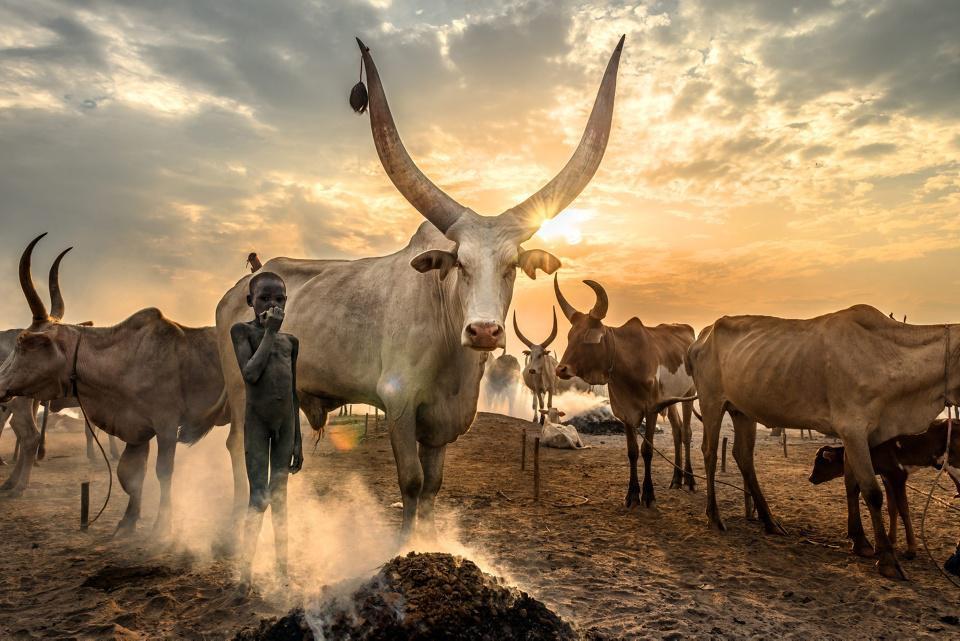[Focus] Magnifique : découvrez les belles images des Global Photos Awards !