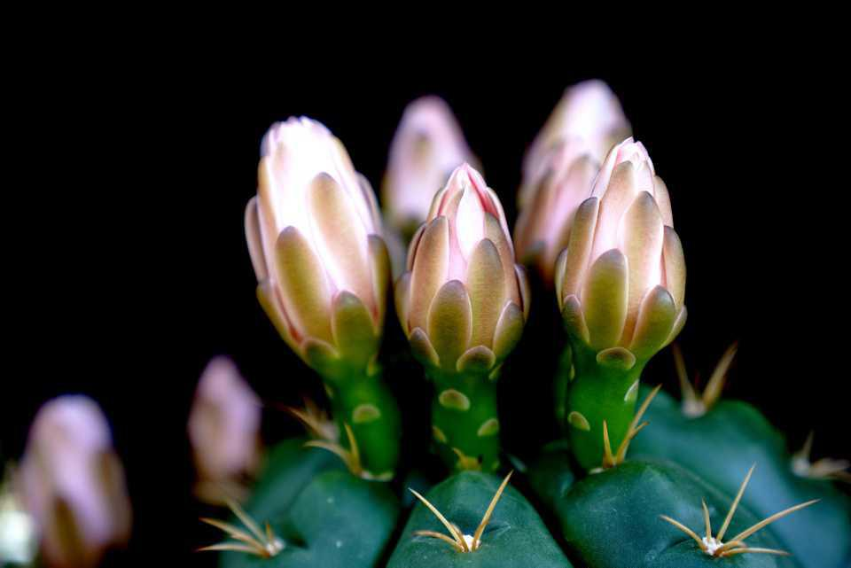 [Focus] - Graphisme et nature : les cactus de Chine
