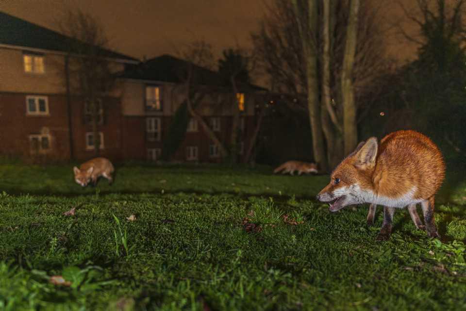 [Focus] - INSOLITE - Les animaux en ville : votez pour votre photo préférée !