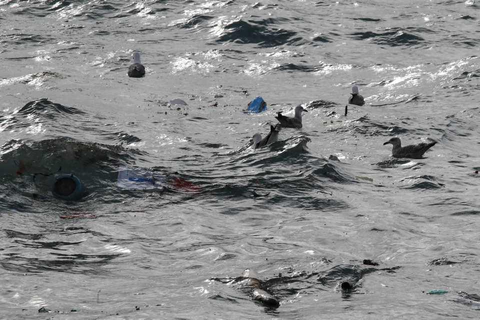 [Focus] - CHOQUANT - Les animaux victimes de la pollution plastique