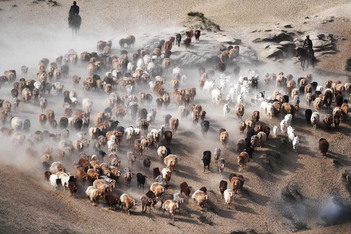 [Focus] - Chine : l'heure de la transhumance d'été sur les plateaux d'Altaï