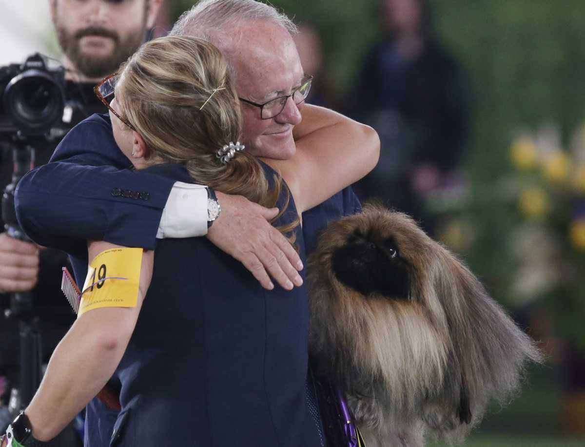 [ Focus ] - Election du plus beau chien du monde - And the winner is ?