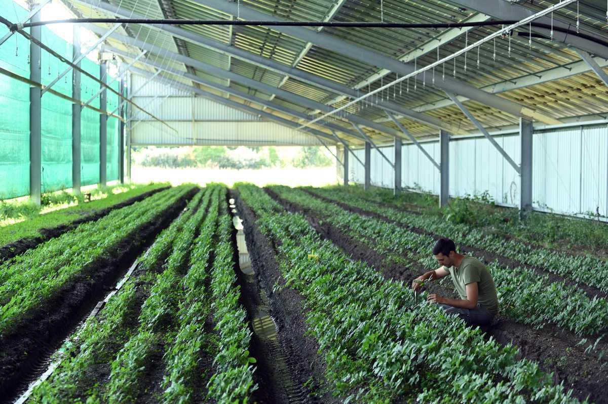 [Focus] Les jardins d'Occitanie : plantes médicinales bio et ginseng Made in France
