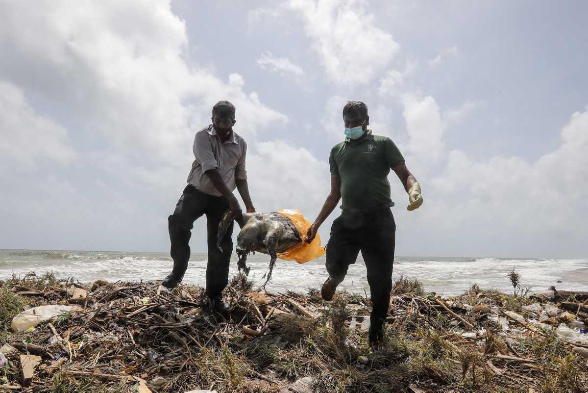 [Focus] - Incendie du MV X-Press Pearl au large du Sri Lanka : une catastrophe écologique