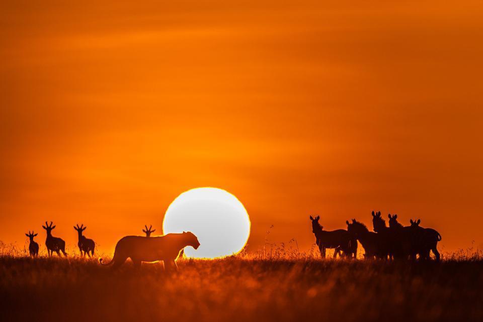 [Focus] - WOW Les belles photos ! Kenya : les animaux au coucher du soleil