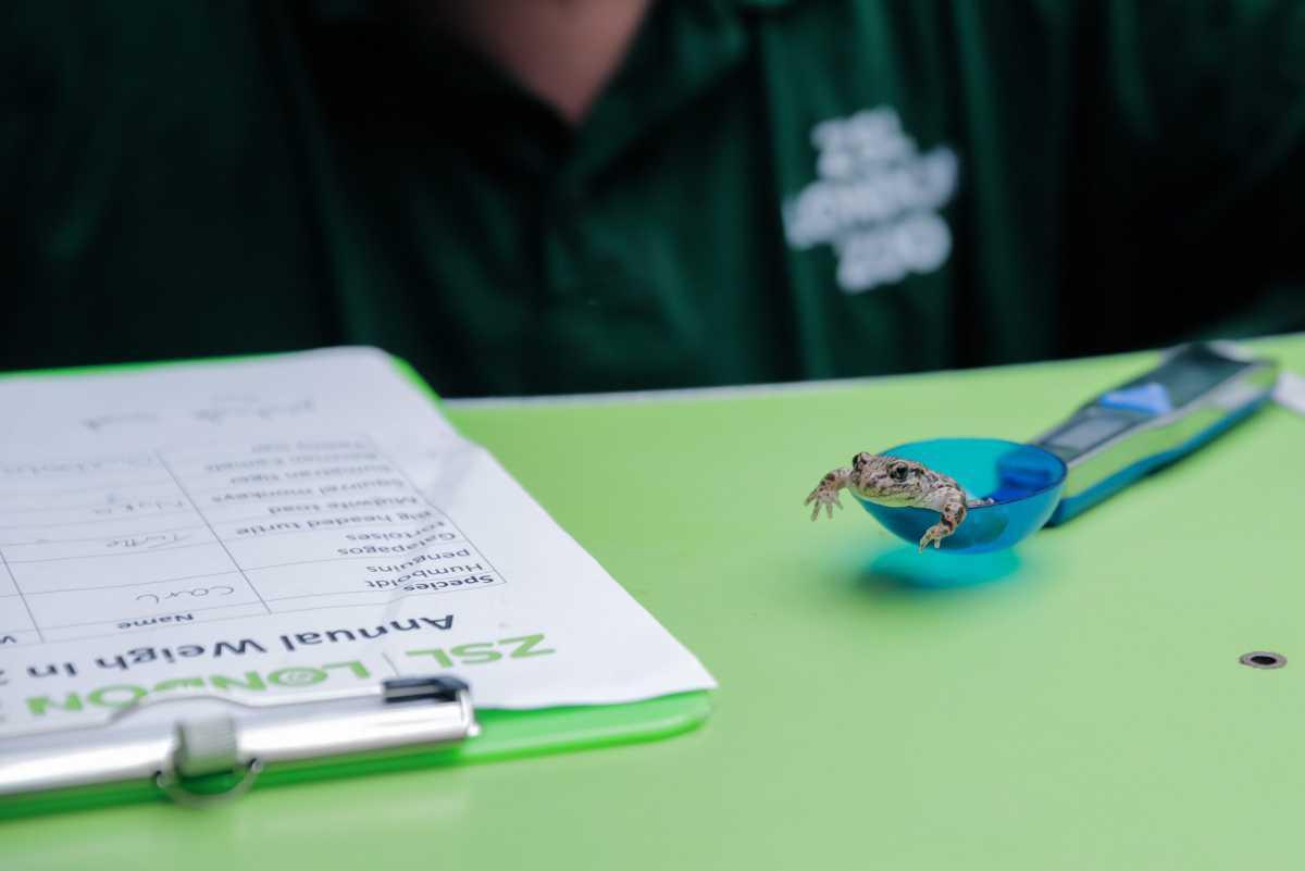 [ Focus ] - La pesée annuelle des animaux du zoo de Londres en images !