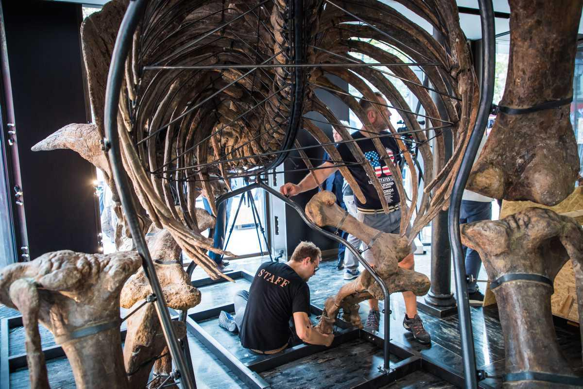 [Focus] - Big John le dinosaure sera vendu aux enchères le 21 octobre 2021