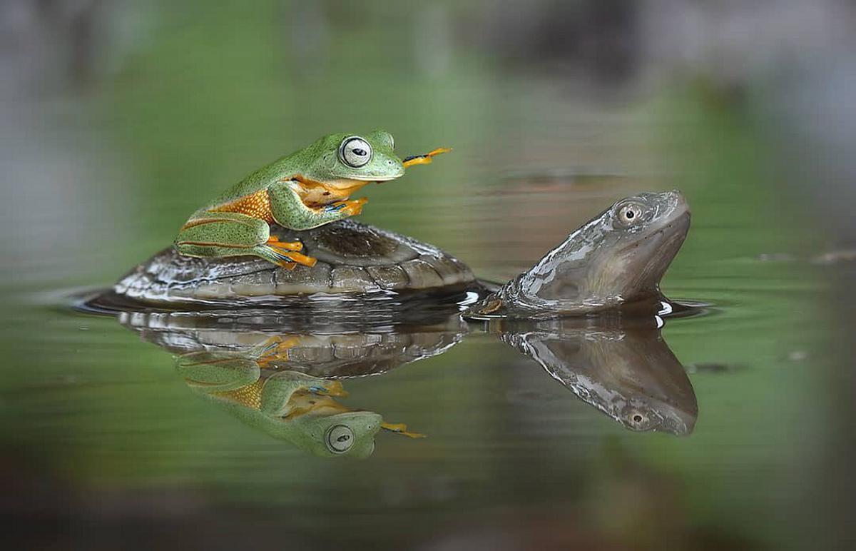 [ Focus ] - Photographies : Les animaux sont-ils solidaires ? Hop taxi !