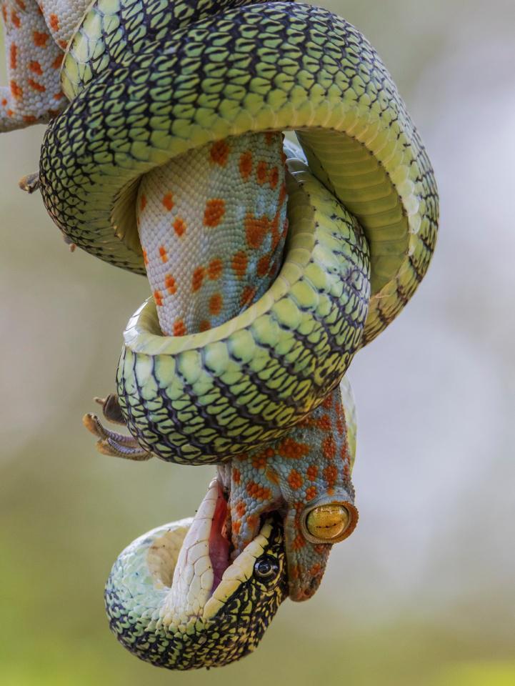 [Focus] - Par ici les belles photos ! La Royal Society of Biology a dévoilé les gagnants de son concours 2021