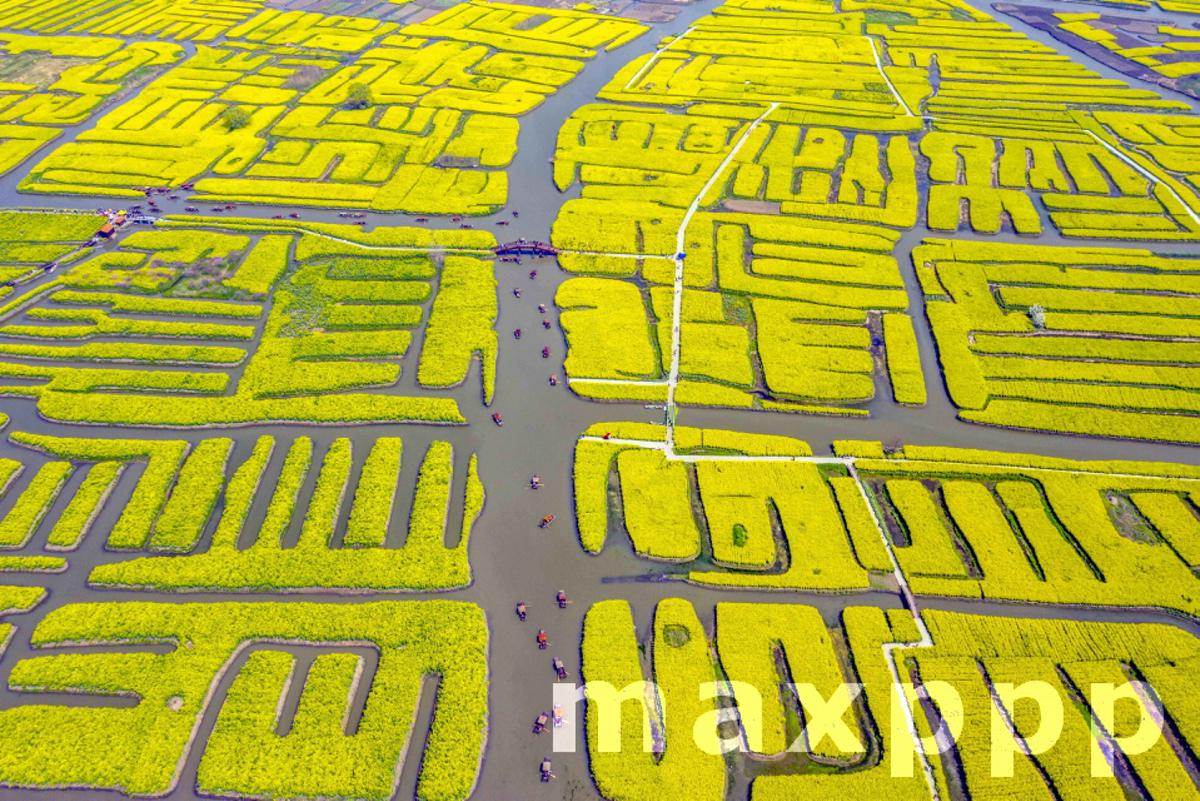 The rape flowers are in full bloom in spring in Taizhou,Jiangsu,China on 28th March, 2021