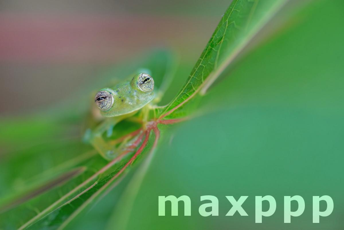 The Eyes of the Glass Frog  WildArt Photographer of the Year
