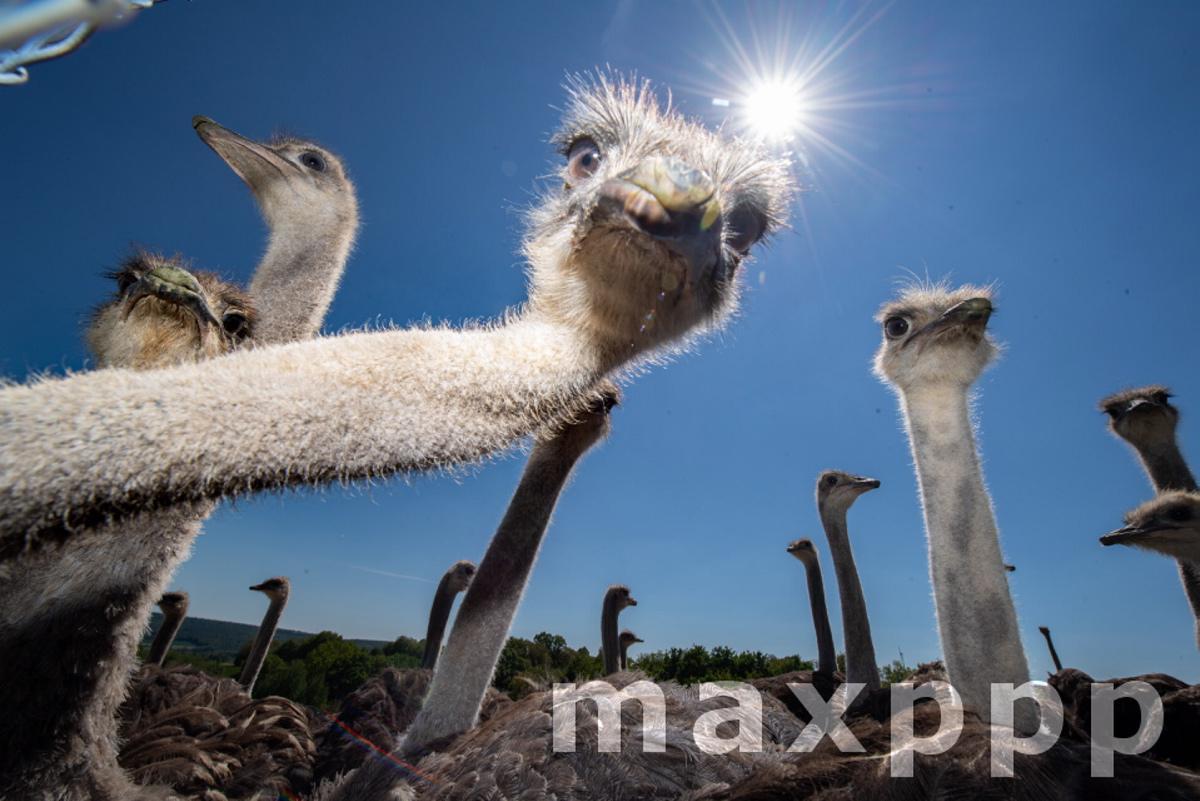 Ostrich farm in Hesse
