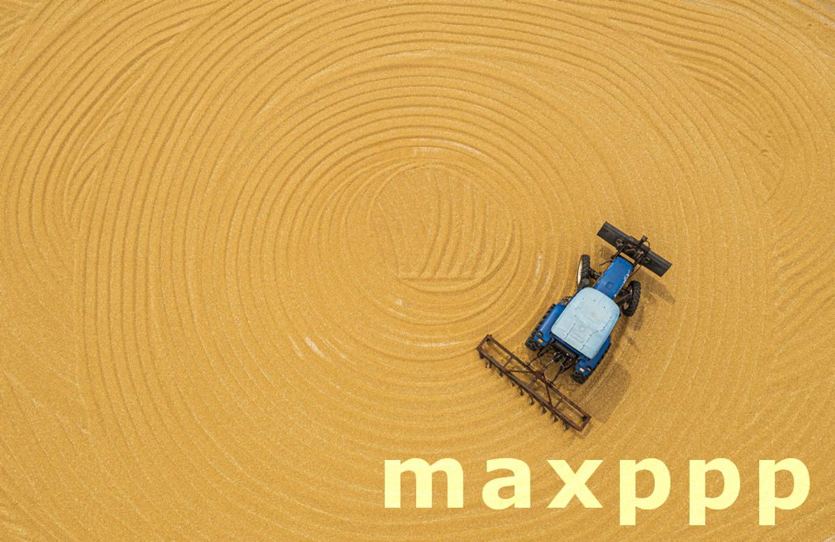 The large agricultural machinery is harvesting the wheat field in Suqian