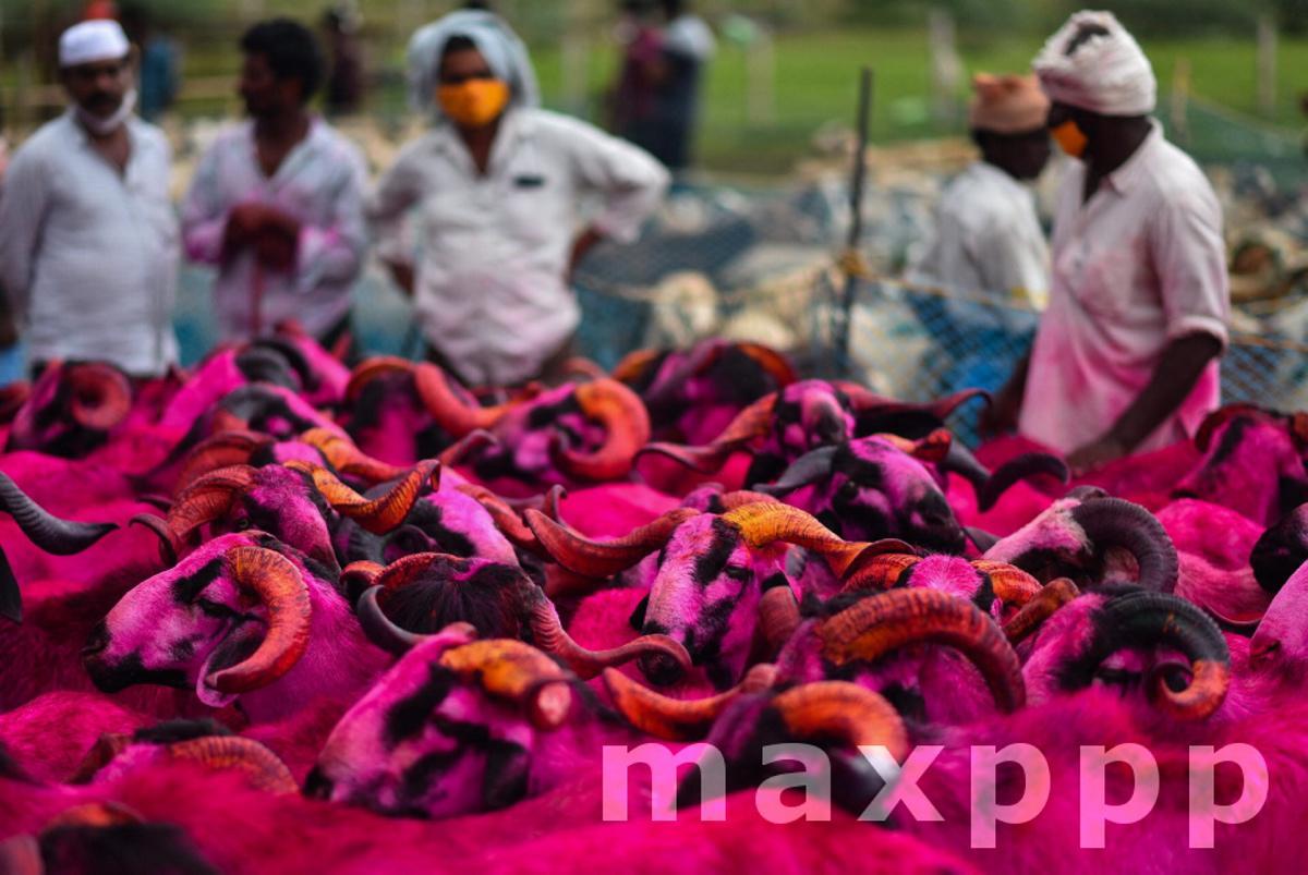 Eid Al-Adha preperation in India