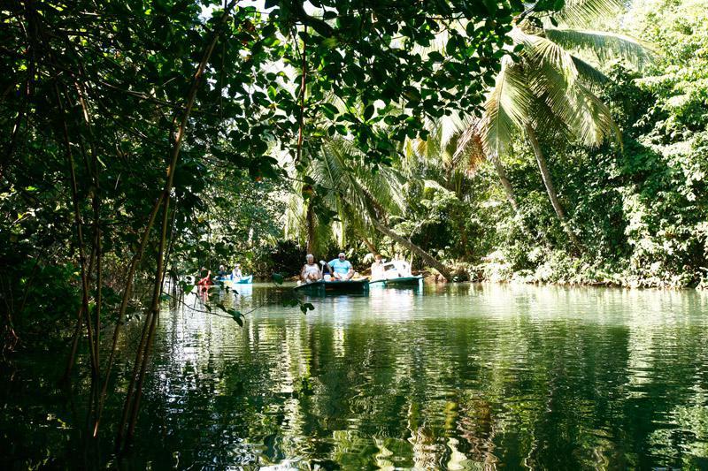 La mangrove du Grand Cul-de-Sac Marin