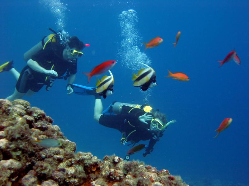 دايفرز داون -Divers Down UAE (East Coast)