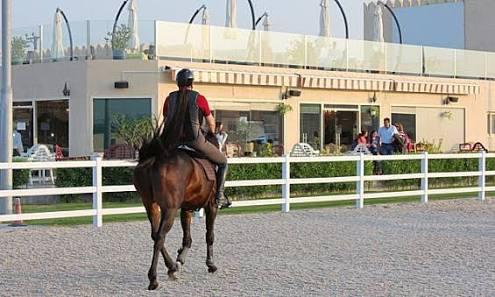 نادي المندره للفروسيه -Mandara Equestrian Club
