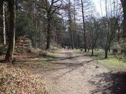 منتزه ليكي هيلز كانتري بارك Lickey Hills Country Park‏