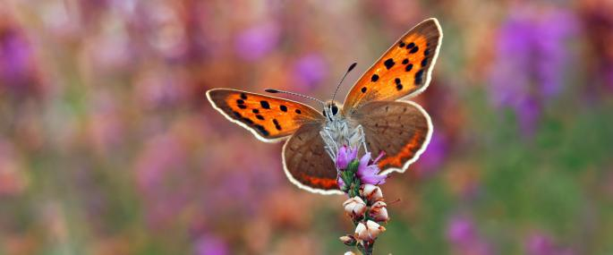 منتزه نيو فيري باترفلاي بارك New Ferry Butterfly Park