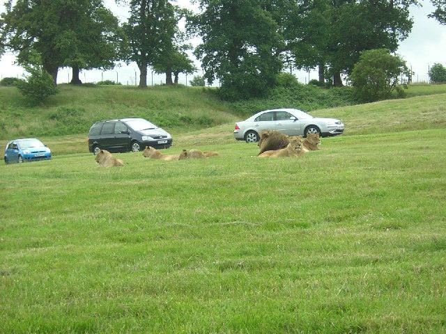 منتزه ووبورن سفاري بارك Woburn Park