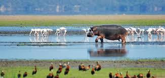 منتزه ويتلاندز أنيمال بارك Wetlands Animal Park Ltd