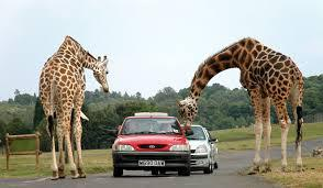 منتزه ويست ميدلاندز سفاري بارك West Midland Safari Park