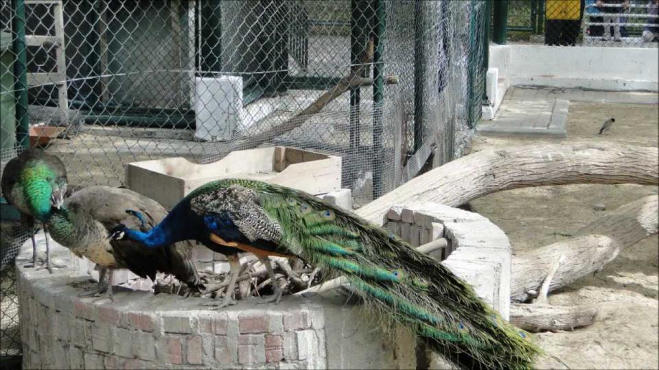 حديقة الحيوانات دبي