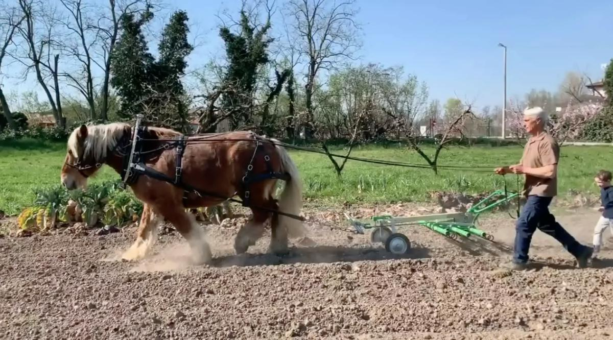 L'uomo che sussurra ai cavalli