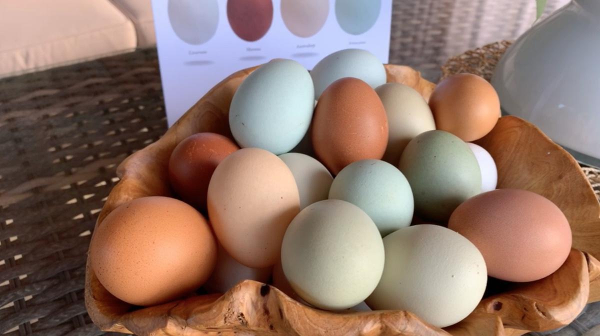 The Garda Egg