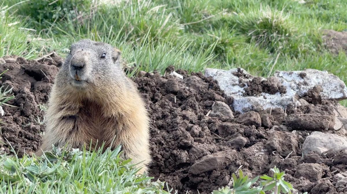 In Lessinia fra le marmotte